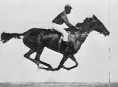 Horse galloping photo by Eadweard Muybridge (1887)